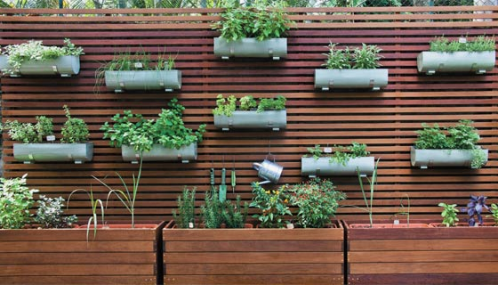ideias jardins grandes:Hortas em casa – Cultivando, Cuidando, Embelezando