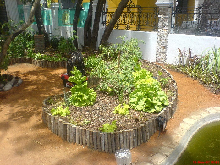 Top Jardim de ervas para você montar na sua casa JK32