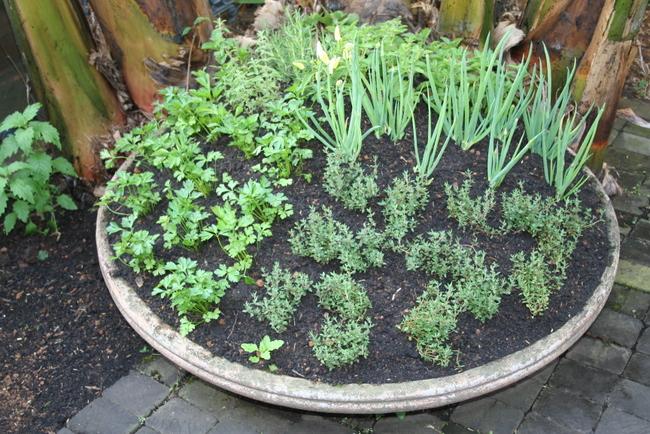 Fabuloso Jardim de ervas para você montar na sua casa DC54