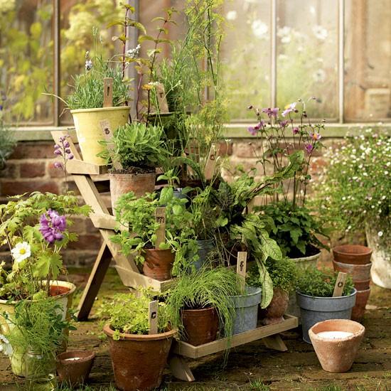 Dicas de jardinagem para sua casa