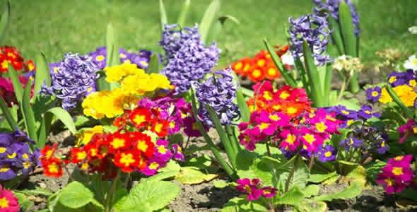 Flores para o seu jardim
