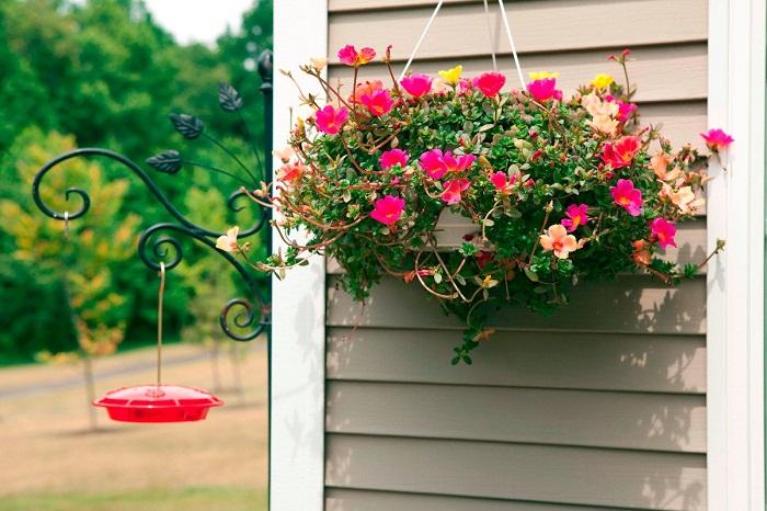 plantas jardim vertical meia sombra : plantas jardim vertical meia sombra:Flores e mais flores pra deixar sua casa mais bonita