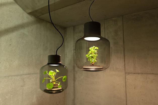 Incriveis Luminarias com Plantas vivas dentro 4